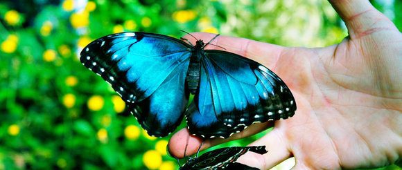 The Butterfly (Struggles)
